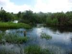 Floride (90)_800x600